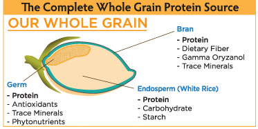 our-whole-grain