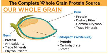 our-whole-grain